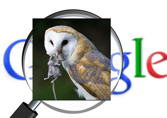 Project Owl Google Search