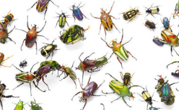 insect population